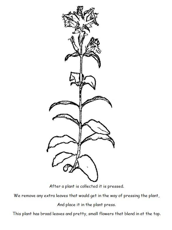 Coloring Book- Pressing Plant