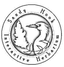 Herbarium Logo Coloring Book Page