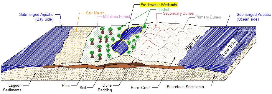 Plant Zone Longitudinal Image
